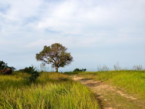 Одинокое дерево на вершине горы